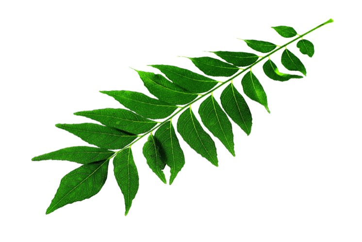 curry leaves recipe